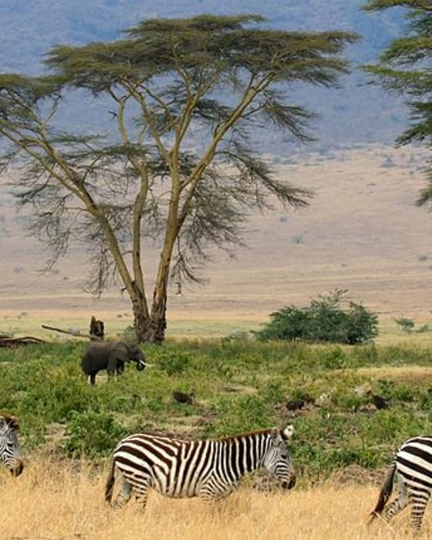 the-african-megafauna