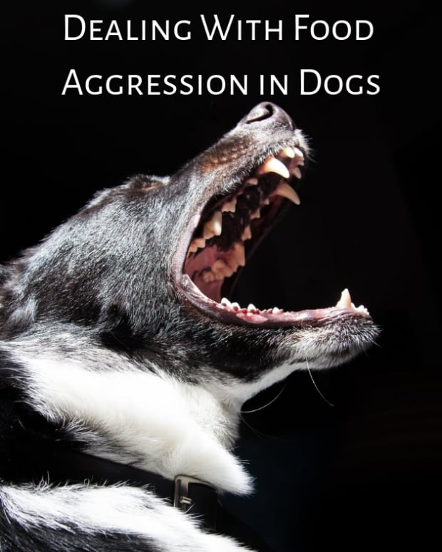 dog-training-tips-aggression