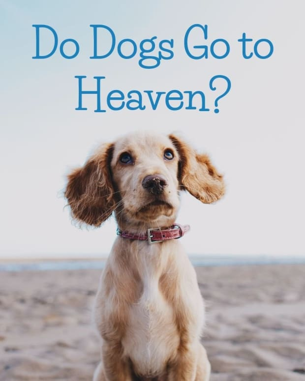 do-dogs-go-to-heaven-will-we-see-dogs-in-heaven