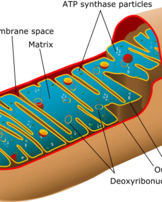 mitochondrial-dna-and-disease-genes-outside-the-nucleus