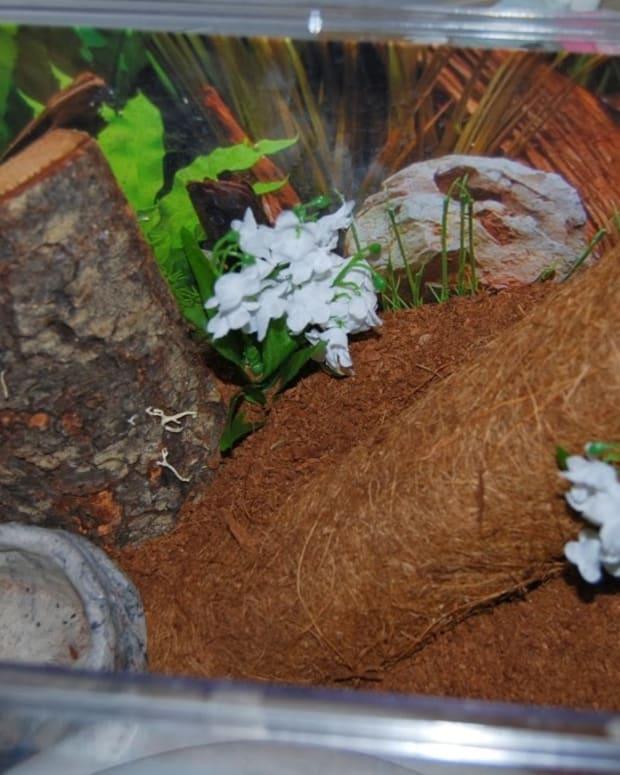 tarantula-care