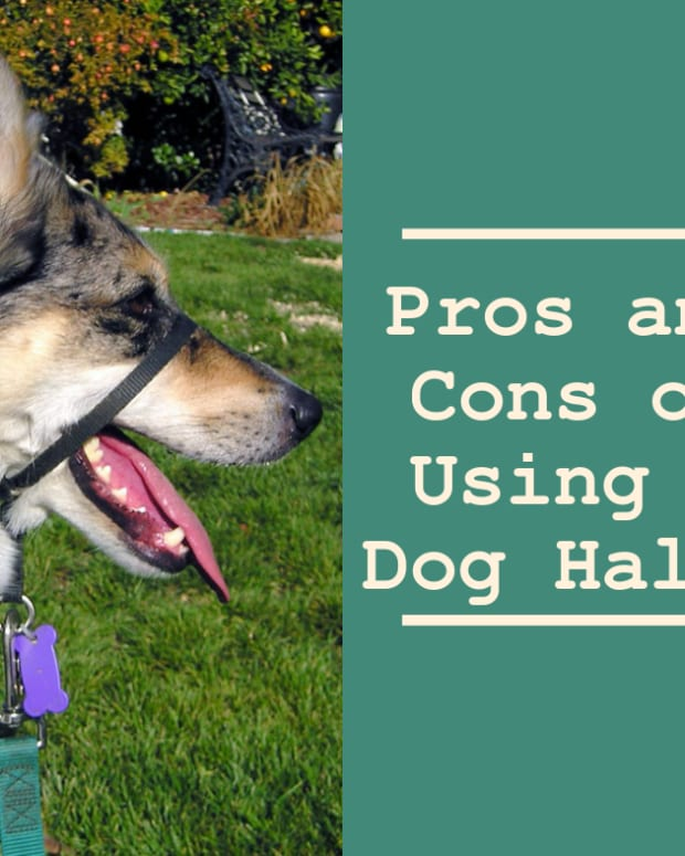dog-training-pros-and-cons-of-using-a-dog-halti