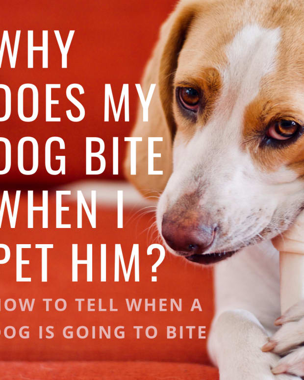 dog-behavior-signs-a-dog-is-about-to-bite