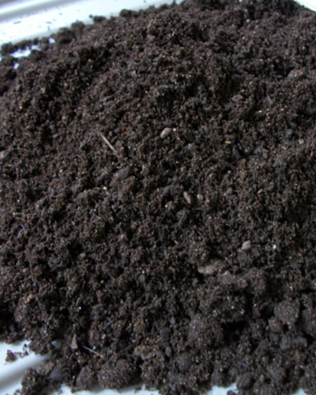 how-to-use-compost-tea