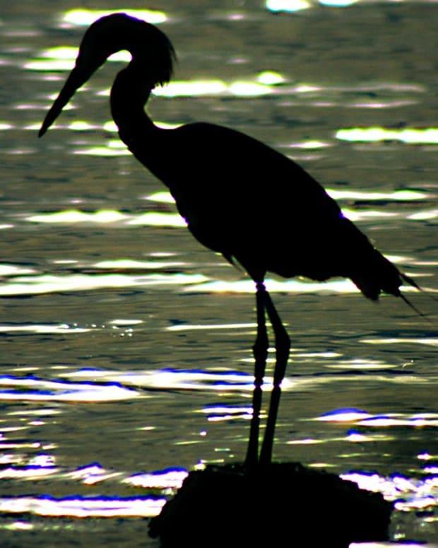 floridavacationwaterbirds-greensleeves