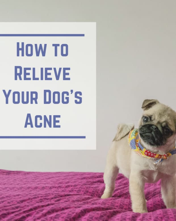 natural-dog-health-acne