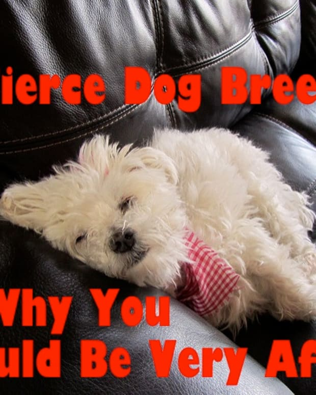 five-ferocious-dog-breeds-your-family-must-be-afraid-of
