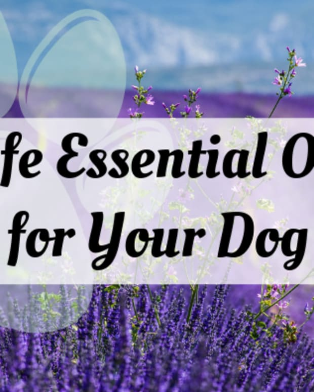 natural-dog-health-aromatherapy