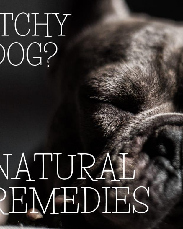 natural-dog-health-allergies
