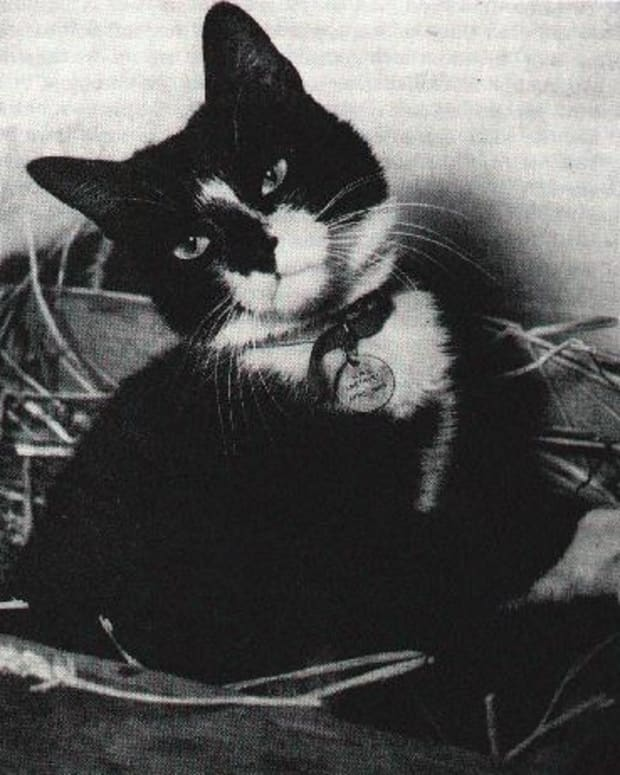 simon-the-cat-wins-the-animal-vc-for-bravery-during-the-yangtze-incident