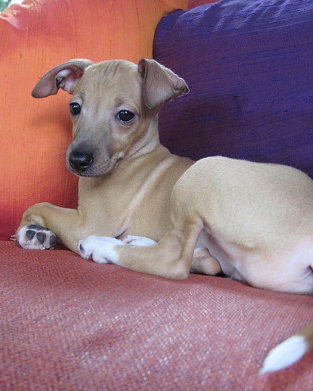 natural-dog-health-acai-vitamin-c-and-other-antioxidants