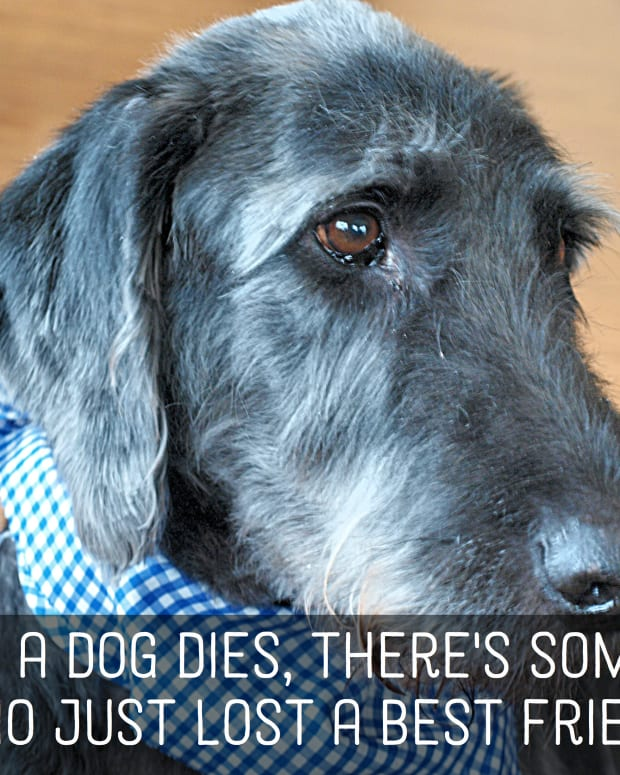 pet-loss-sympathy-messages