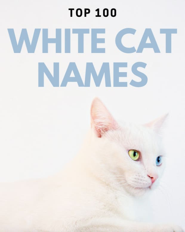 what-are-good-white-cat-names
