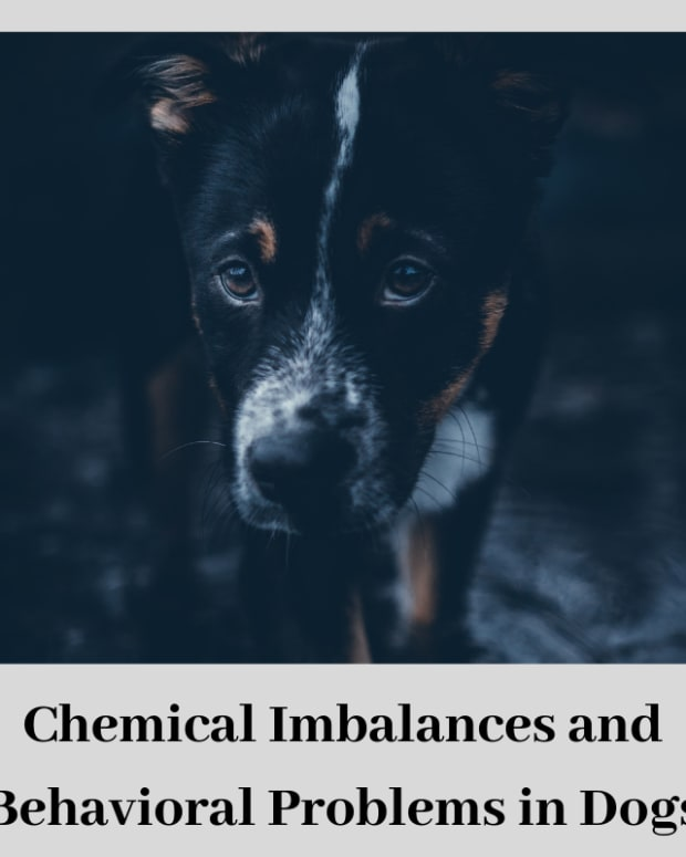 dog-behaviorthe-role-of-brain-chemistry