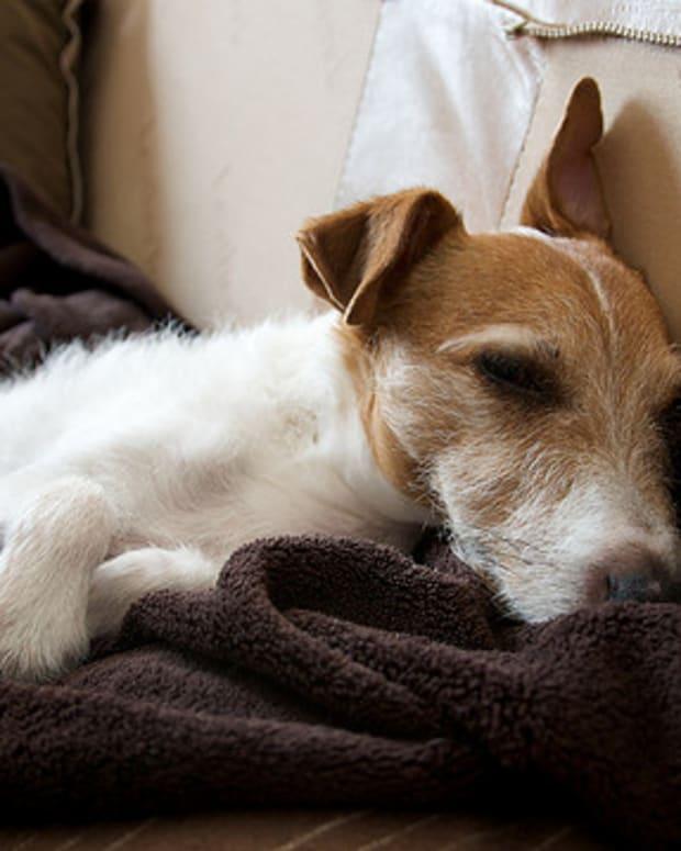 rimadyl-for-dog-arthritis