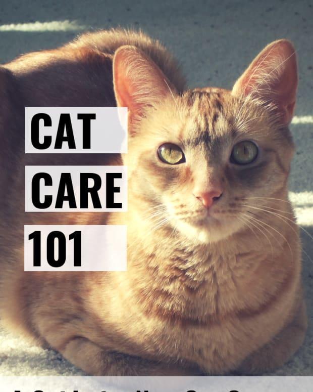 cat-care-101