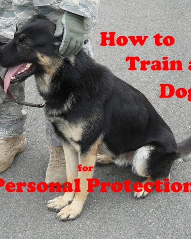 train-guard-dog