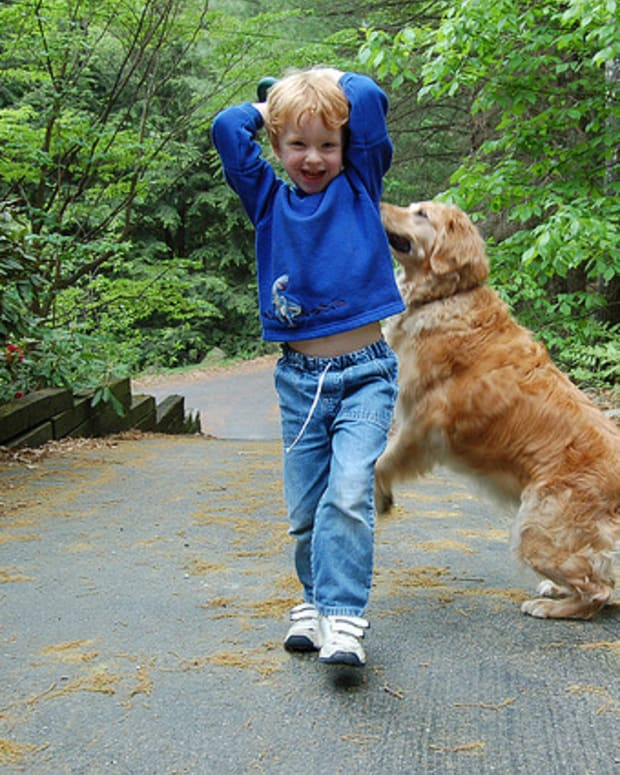 five-great-dog-breeds-that-love-kids