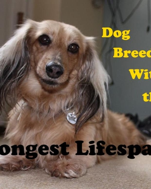 five-great-dog-breeds-that-live-long