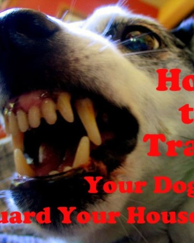 dog-training-how-to-train-a-dog-to-guard-your-house