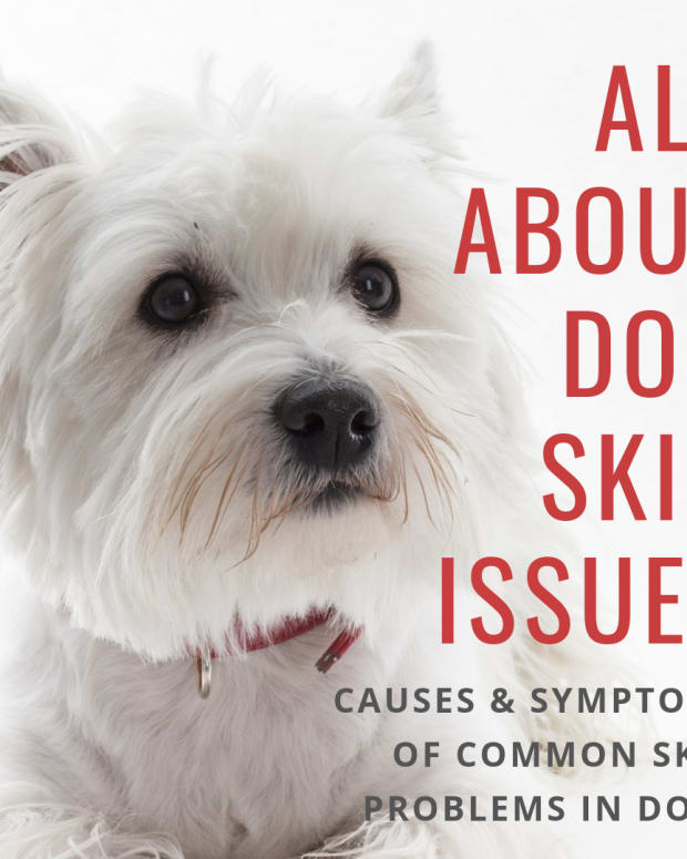 causes-of-skin-disorder-in-dogssymptoms-types-and-which-breeds-tend-to-develop-them