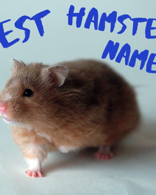 best-hamster-names