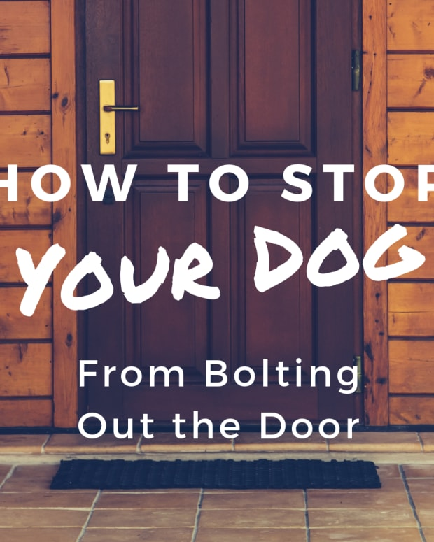 dog-training-how-to-prevent-your-dog-from-bolting-out-the-door
