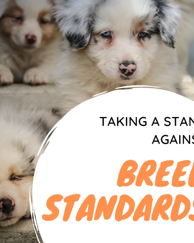 when-pet-owners-and-breeders-should-make-a-stand-ageinst-breed-standards