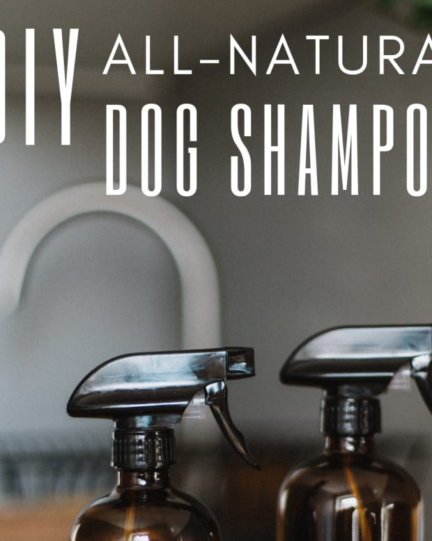 homemade-dog-shampoo-recipe