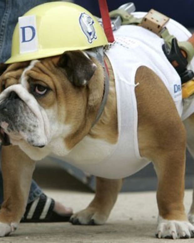 cute-and-cheap-halloween-costumes-for-dogs