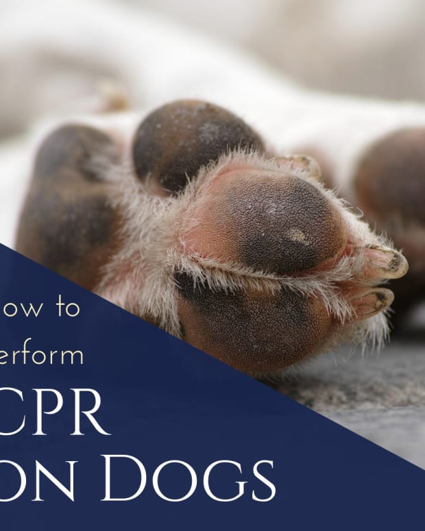 how-to-perform-cpr-on-your-dog