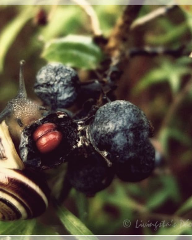 how-to-find-and-catch-a-garden-snail