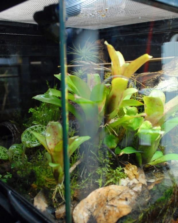 building-a-salamander-vivarium