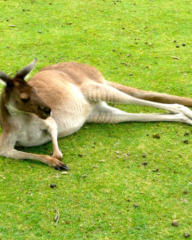 whiteman-park-western-australia-a-review