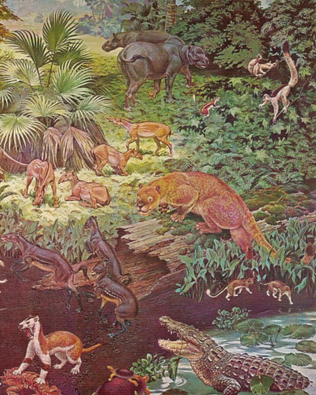after-the-dinosaurs-life-in-the-eocene