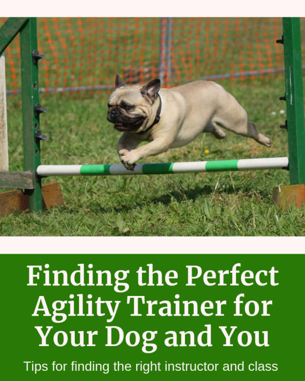 how-to-find-the-right-agility-classes-for-you-locating-a-good-agility-trainer