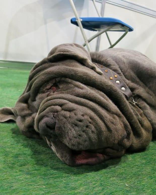 five-ugly-dog-breeds