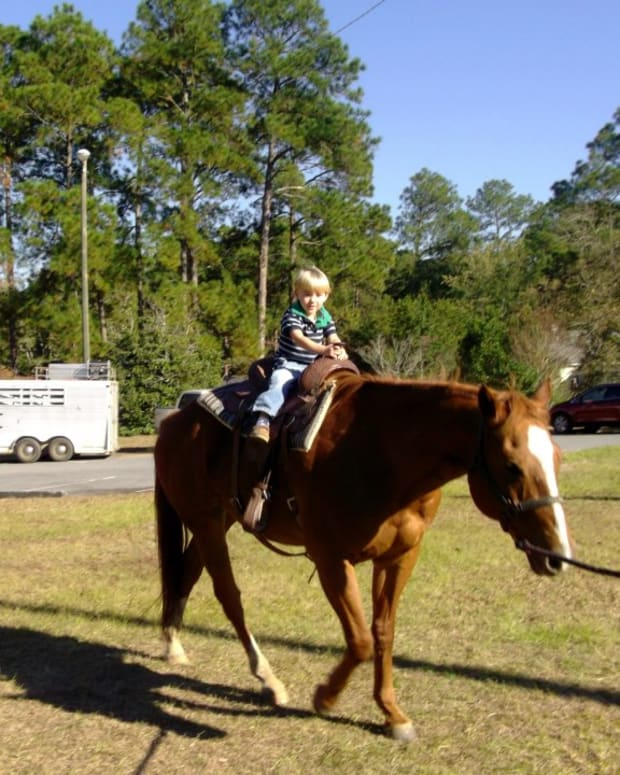 how-to-calm-a-nervous-horse