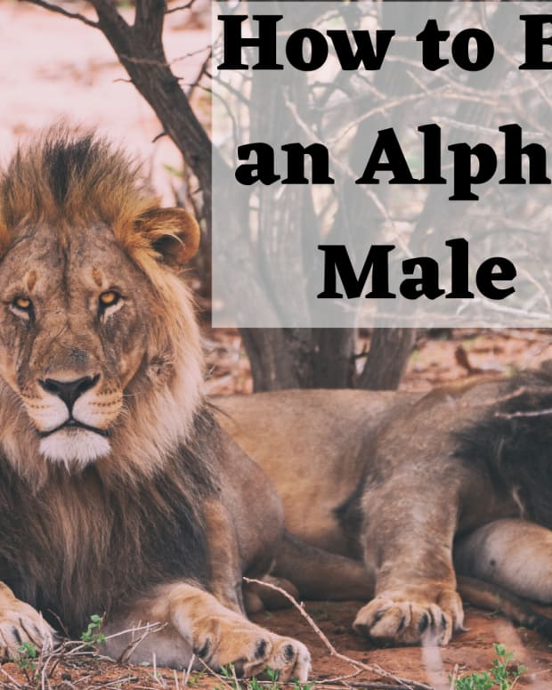 how-to-be-an-alpha-male-typical-characteristics-personality-traits-and-behavior-of-an-alpha-male