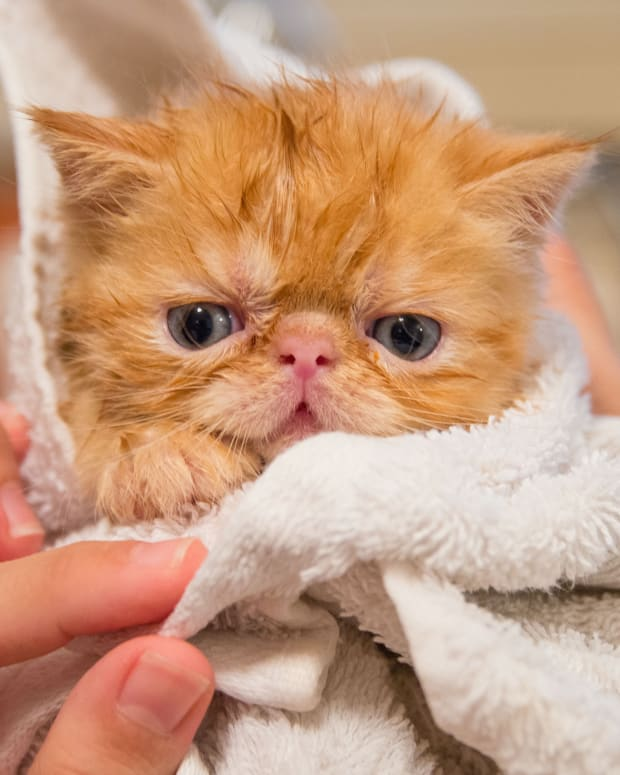 bathing-cats