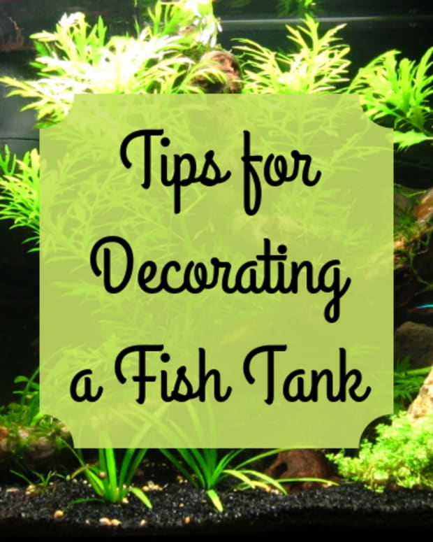 how-to-pick-decorations-for-a-fish-tank