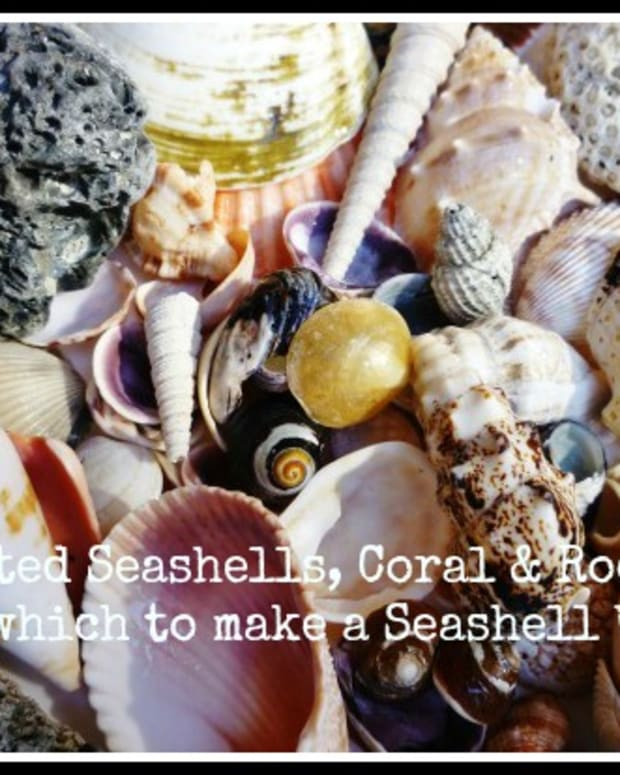 how-to-make-a-seashell-wreath-wreath-making