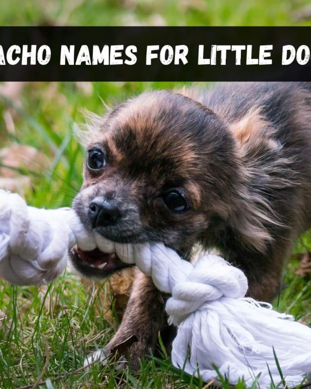 macho-dog-names