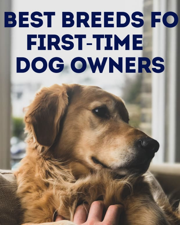 what-is-the-best-breed-of-dog-for-a-first-time-owner
