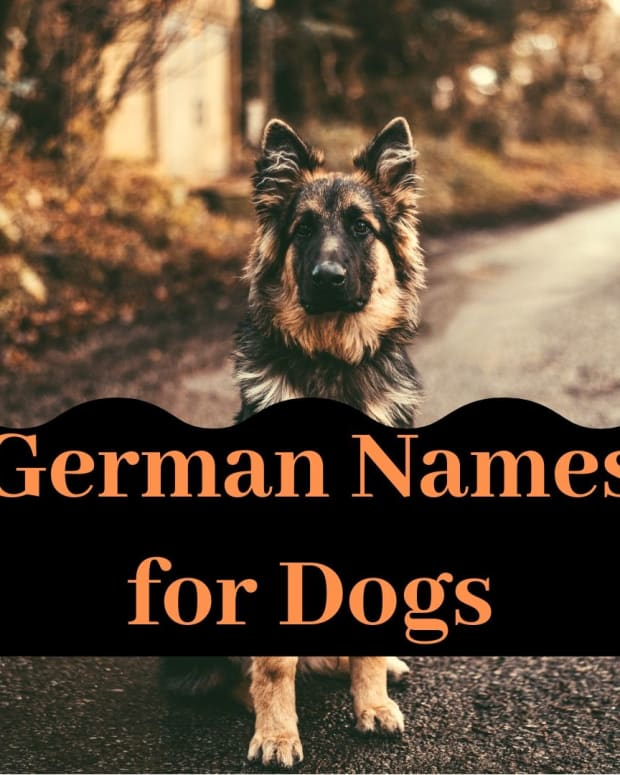 great-dog-names-from-germany