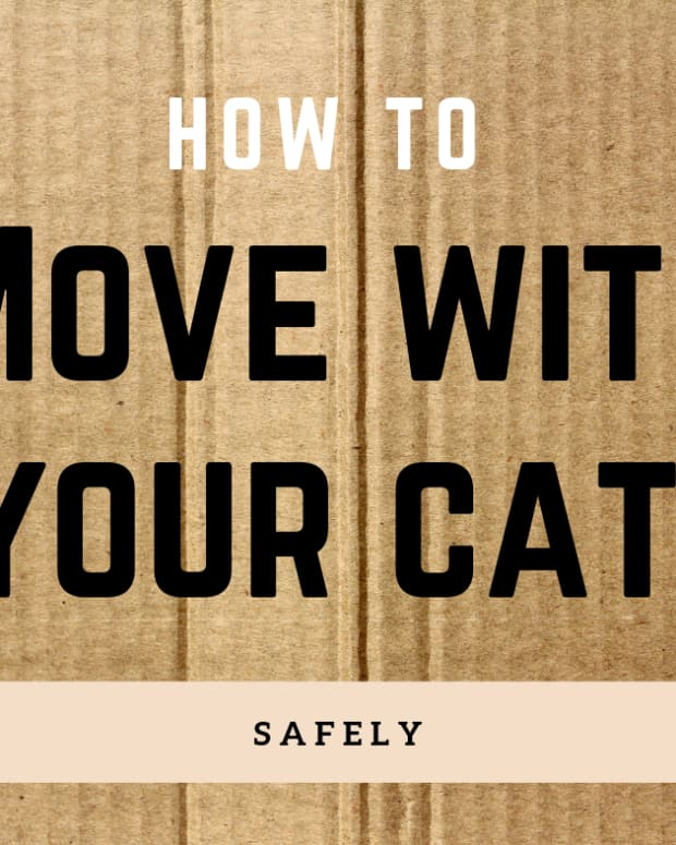 help-your-cat-adjust-to-a-new-home