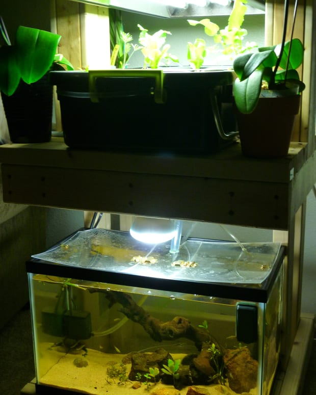 aquaponic-build-the-functioning-system