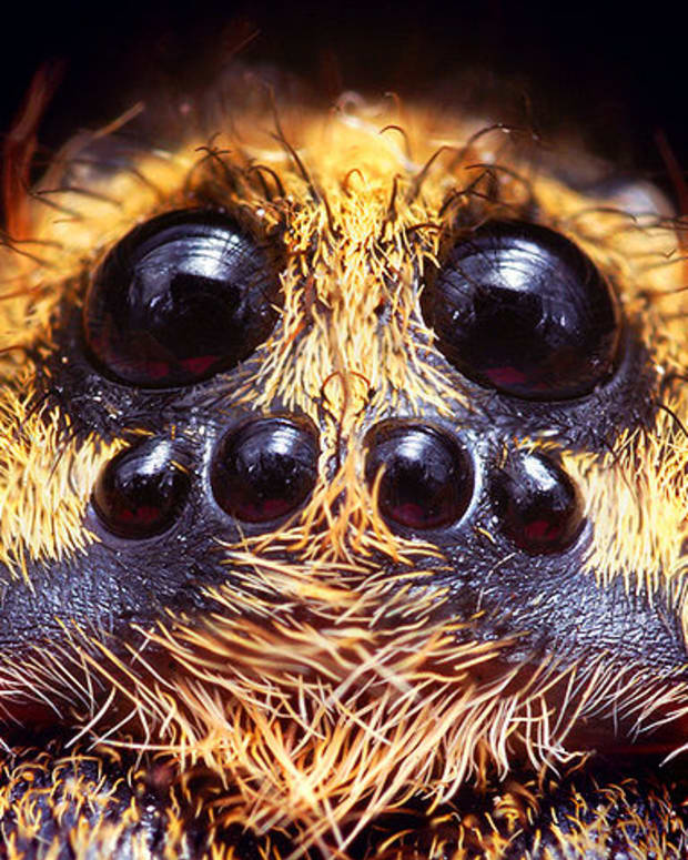 beautiful-spider-pictures