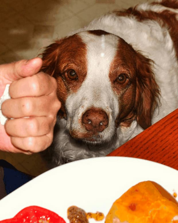 dog-first-aid-the-dangers-of-giving-a-dog-burnt-toast