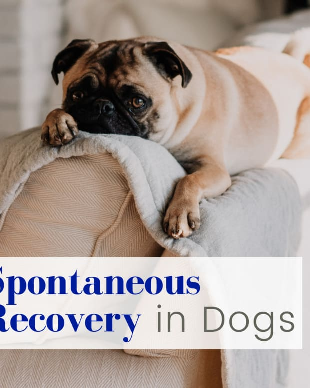 undestanding-spontaneous-recovery-in-dogs